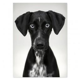Plakat DOG na plexibond - HK Living
