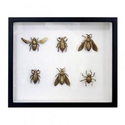 Mosiężne insekty w ramce - HK Living