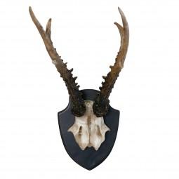 Dekoracja ścienna poroże jelenia