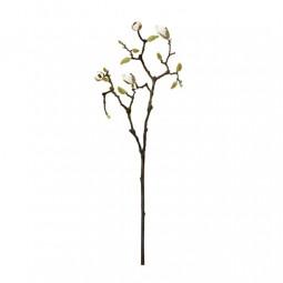 Gałąź kwiatu magnolii